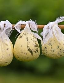 Jānu siers (Jāņi cheese)